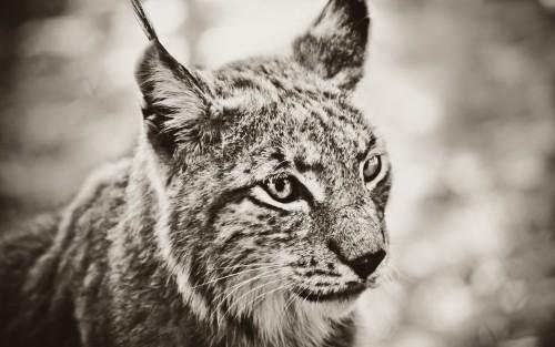 Animals218.jpg