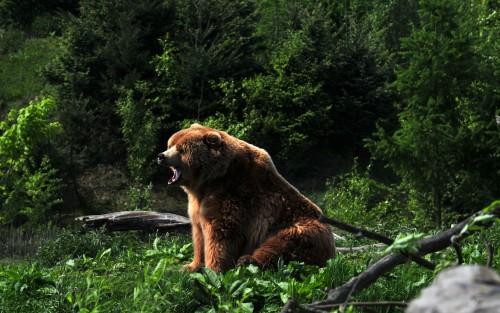 Animals240.jpg