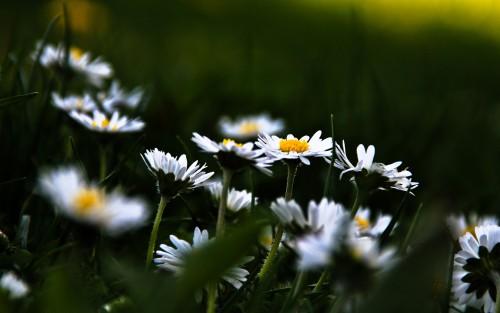 Flowers104.jpg