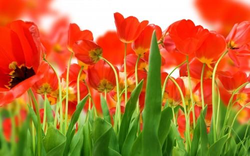 Flowers105.jpg