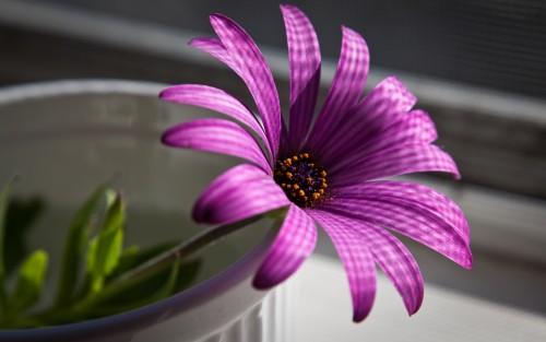 Flowers106.jpg