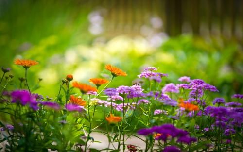 Flowers114.jpg