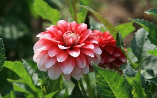 Flowers116.jpg