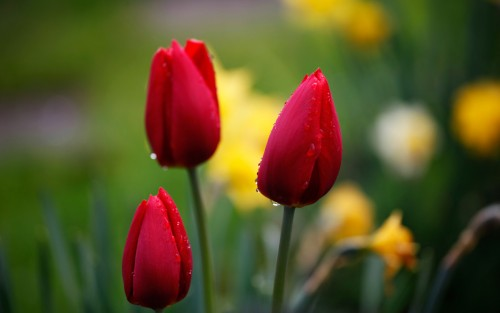 Flowers117.jpg