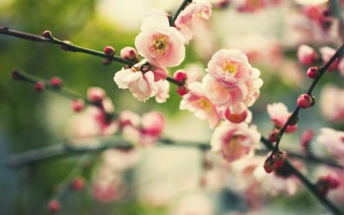 Flowers119.jpg
