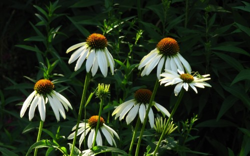 Flowers12.jpg