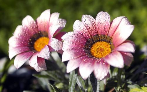 Flowers127.jpg