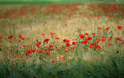 Flowers128.jpg