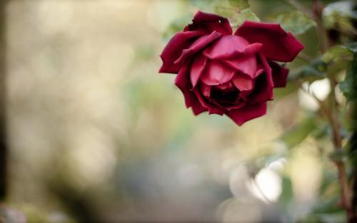 Flowers130.jpg