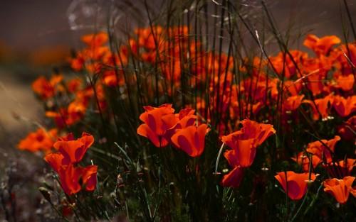 Flowers133.jpg