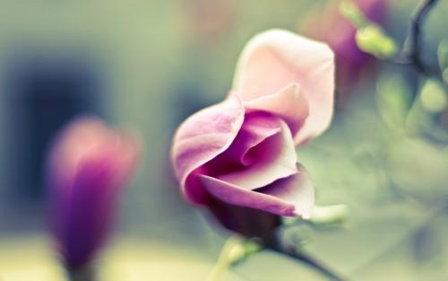 Flowers136.jpg