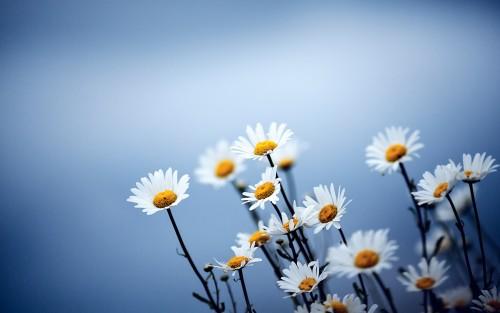 Flowers137.jpg