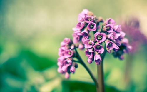 Flowers138.jpg