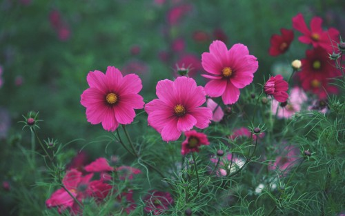 Flowers139.jpg