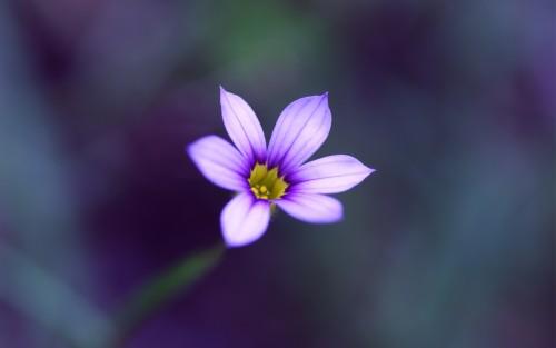 Flowers141.jpg