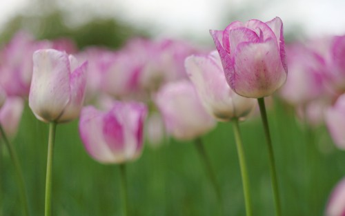 Flowers142.jpg