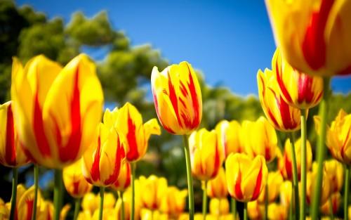 Flowers145.jpg