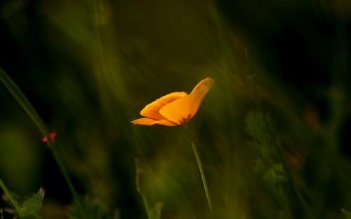 Flowers146.jpg