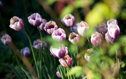 Flowers148.jpg