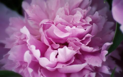 Flowers149.jpg