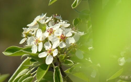 Flowers151.jpg