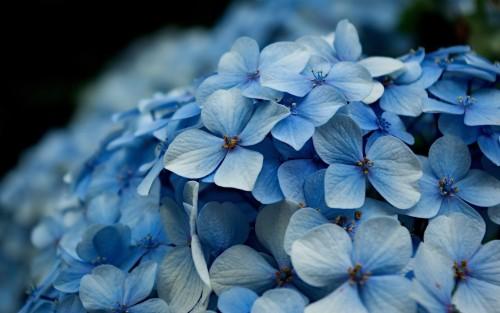 Flowers152.jpg