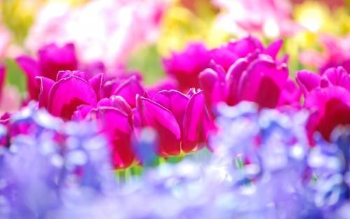 Flowers153.jpg