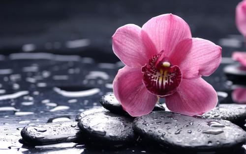 Flowers157.jpg