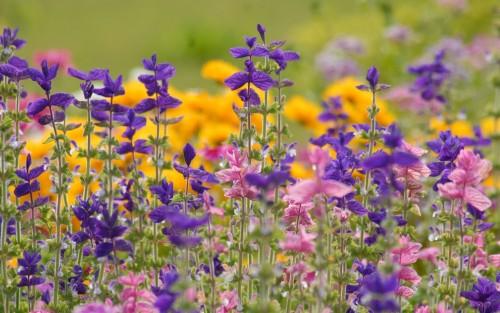 Flowers16.jpg