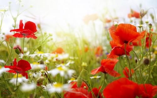 Flowers162.jpg