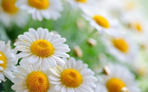 Flowers164.jpg