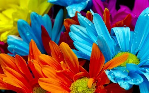 Flowers169.jpg
