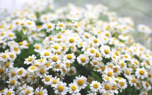 Flowers171.jpg