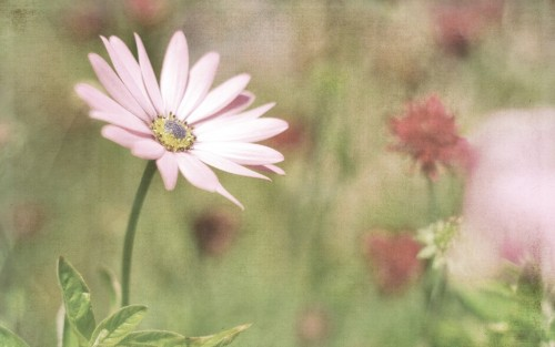 Flowers172.jpg