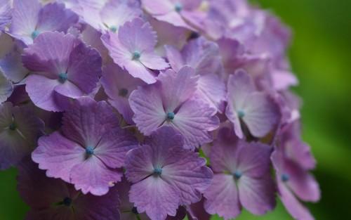 Flowers173.jpg