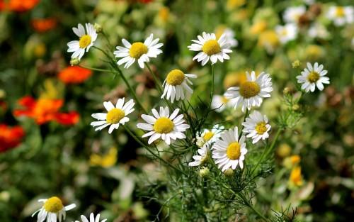 Flowers175.jpg