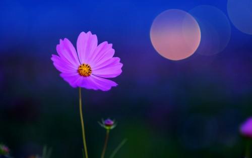 Flowers177.jpg