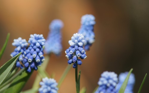 Flowers178.jpg