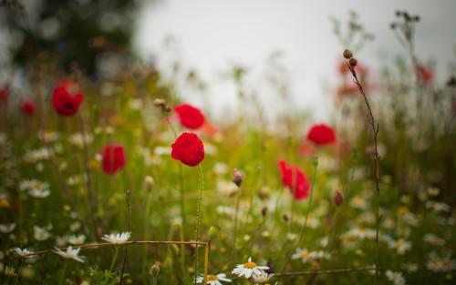 Flowers180.jpg