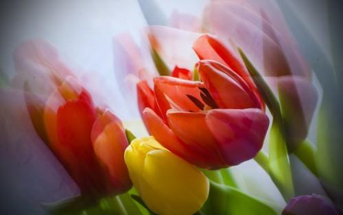 Flowers181.jpg