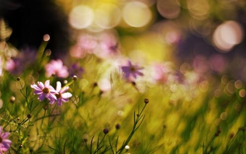 Flowers183.jpg