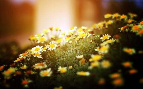 Flowers184.jpg