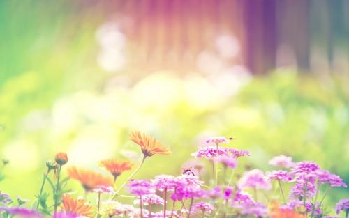 Flowers185.jpg