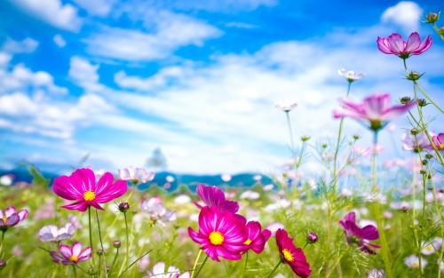 Flowers186.jpg
