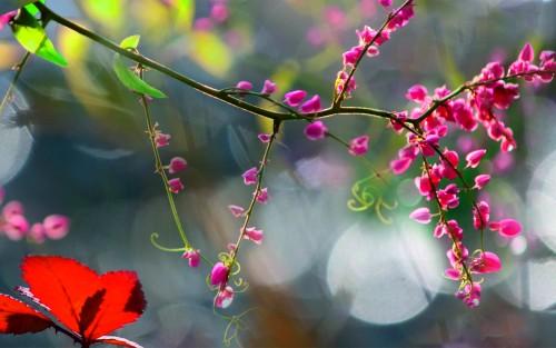 Flowers187.jpg
