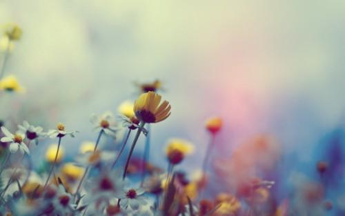 Flowers188.jpg