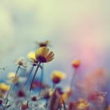 Flowers188