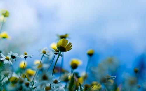 Flowers190.jpg