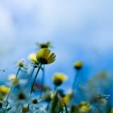 Flowers190