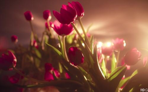 Flowers194.jpg